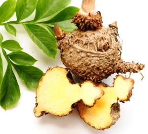 The konjac root is the source of glucomannan